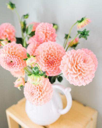 imagens de flores 8