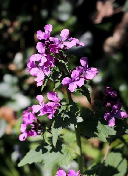 imagens de flores 12
