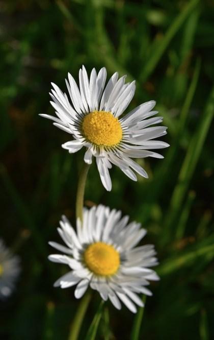 imagens de flores 14
