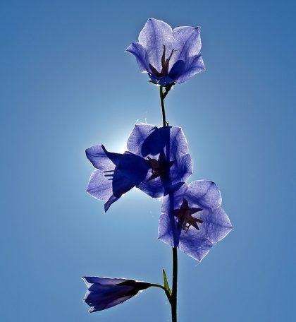 imagens de flores 23