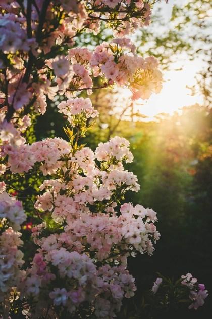 imagens de flores 24