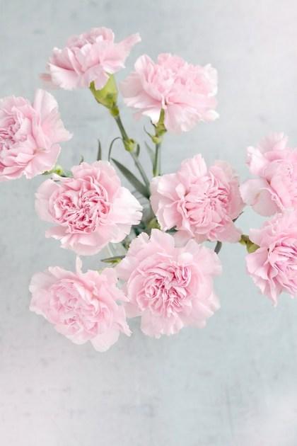 fotos de rosas 2