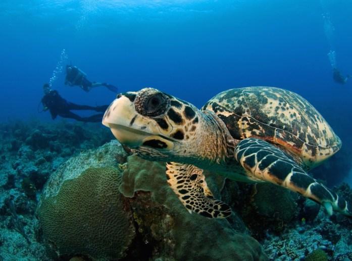 Ocean Frontiers Diving Adventures in the Cayman Islands