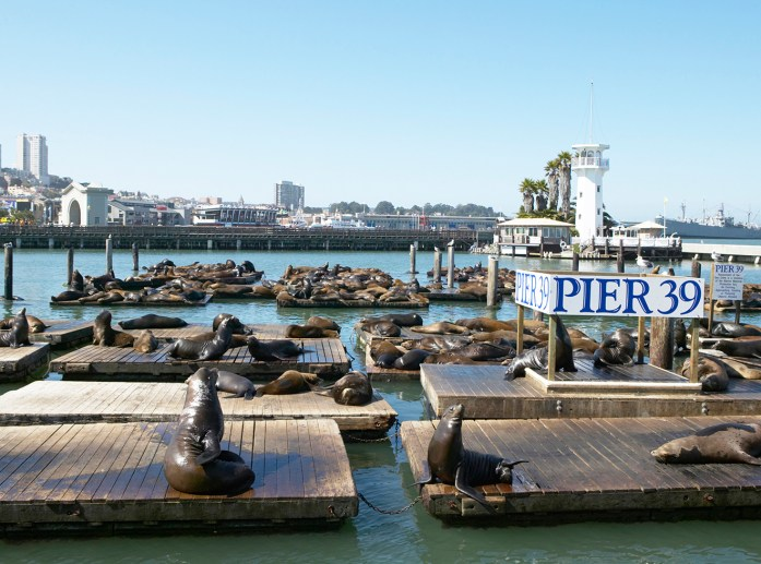 Fisherman's Wharf,