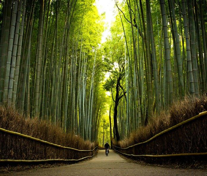 in the path of bamboo near Tenryuu-ji temple