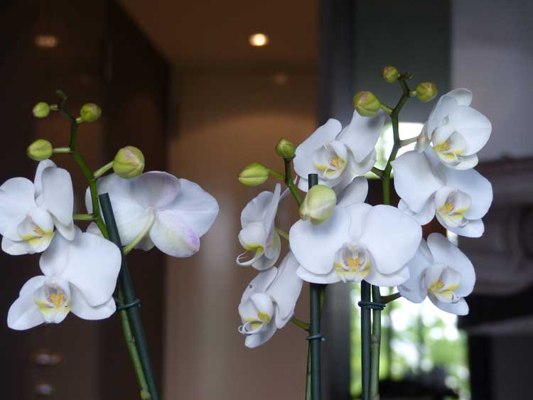 The-Dylan-Hotel---serendipity-suite.jpg-Orchid