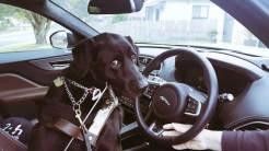 Jaguar-FPace-Australia-MenStyleFashion-2017-blind-dog-victoria.jpg-22