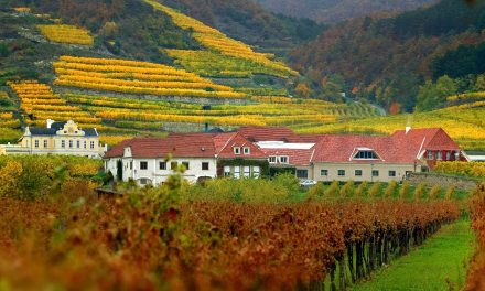 Austrian Wine – Cultivating Austria's Terroir Tourists