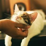Things You Should Know Before Getting a Cat