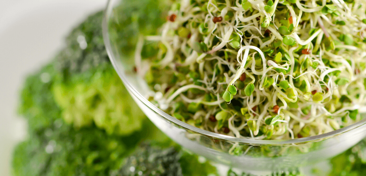 broccoli sprouts pin image 1