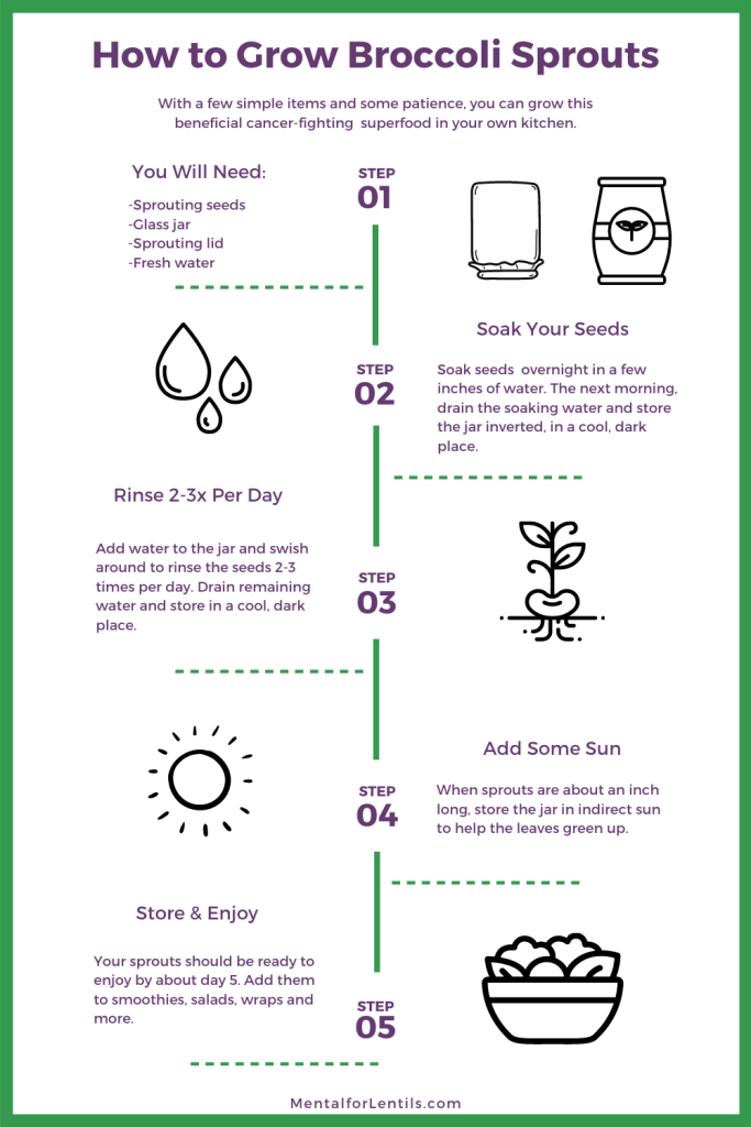 broccoli sprouts infographic