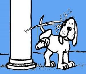 Brasil: aqui o poste mija no cachorro