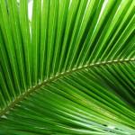 palmier pour dépolluer