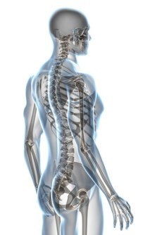X-ray Anatomy on White