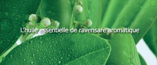 Huile essentielle de ravensara aromatique