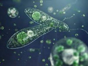 Génesis. Primeras algas marinas