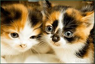 Gambar Kucing Telon godean.web.id