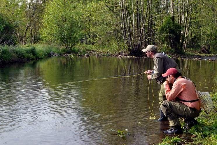 Guias de pesca