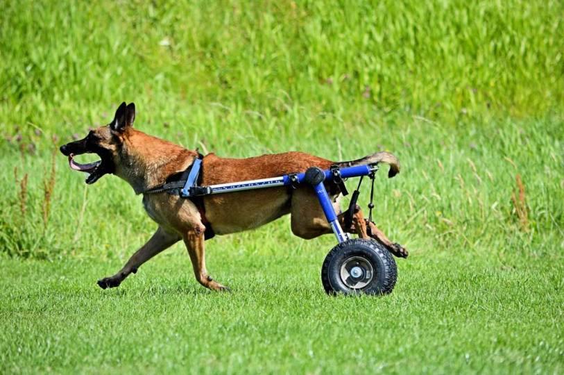 Silla de ruedas para perrros