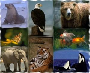 zooloji nedir