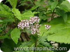 flower in Vof