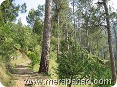pathway in gwaldam