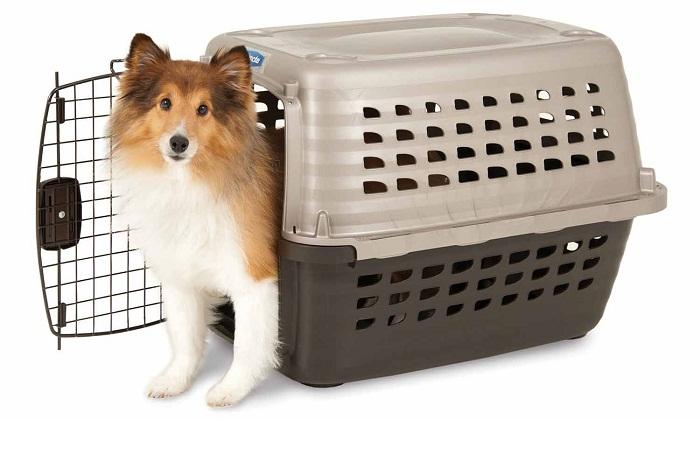 Os cães de grande porte, que não possuem autorização especial para irem nas cabines, devem ser despachados em caixotes de grades