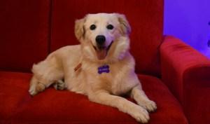 Maddie, la perrita adoptada que hoy vive en Madison MK Perú