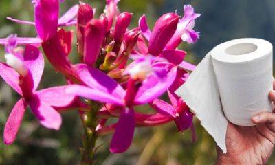 Lanzan papel higiénico con aromas de la flora peruana