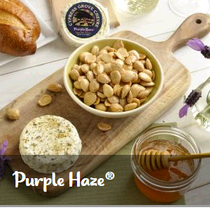 purple-haze-merchants-market-group
