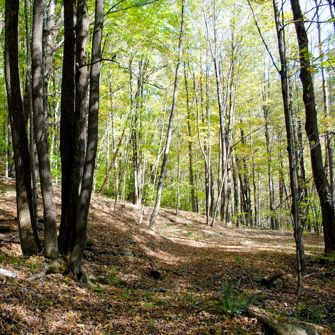 vermont hiking trail