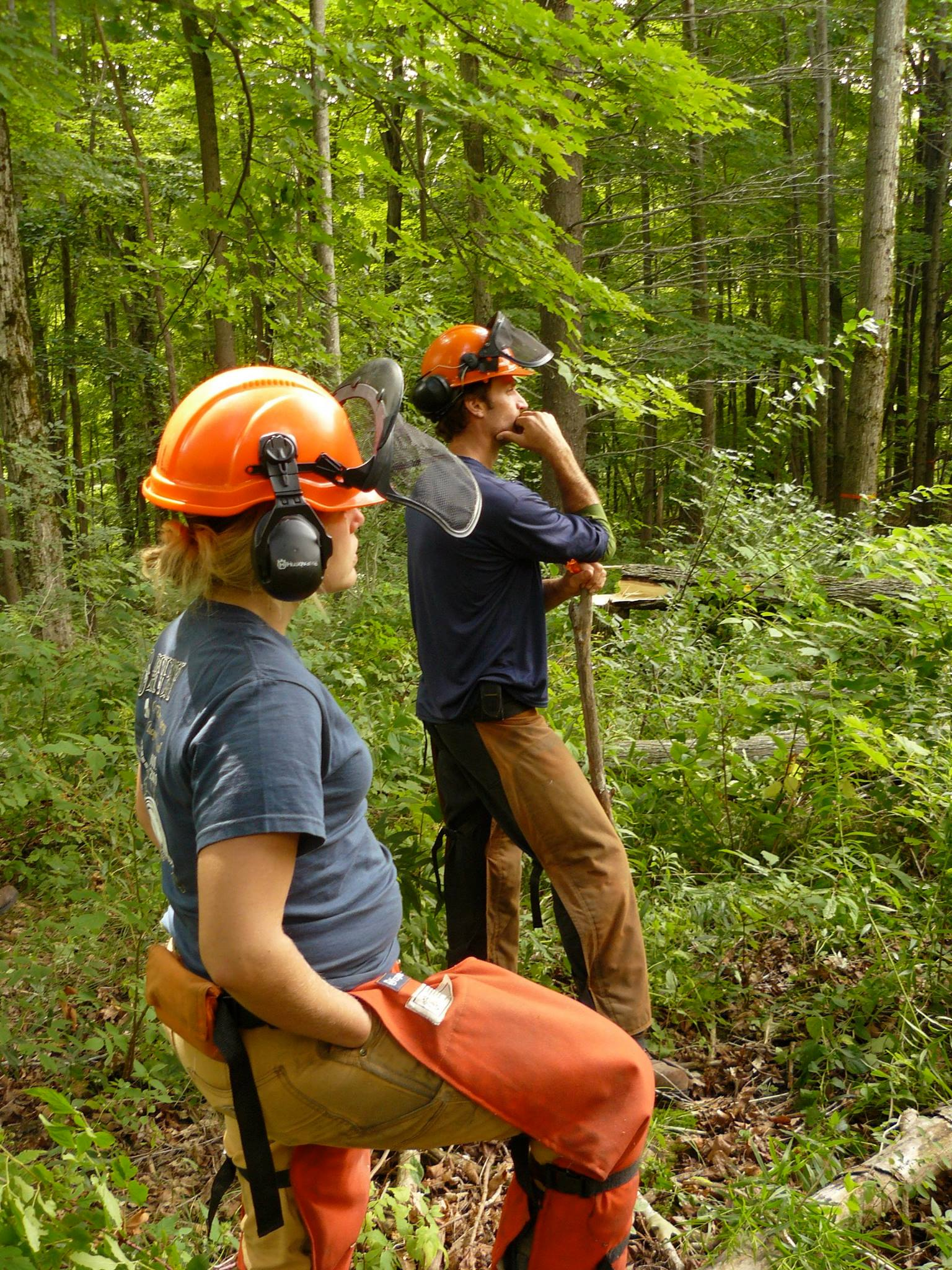 Forest health in Vermont