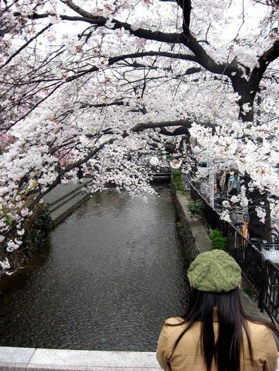 A woman stops to gaze at the cherry blossoms over a canal in central Kyoto.Photo by Gary A.Warner, The Orange County Register