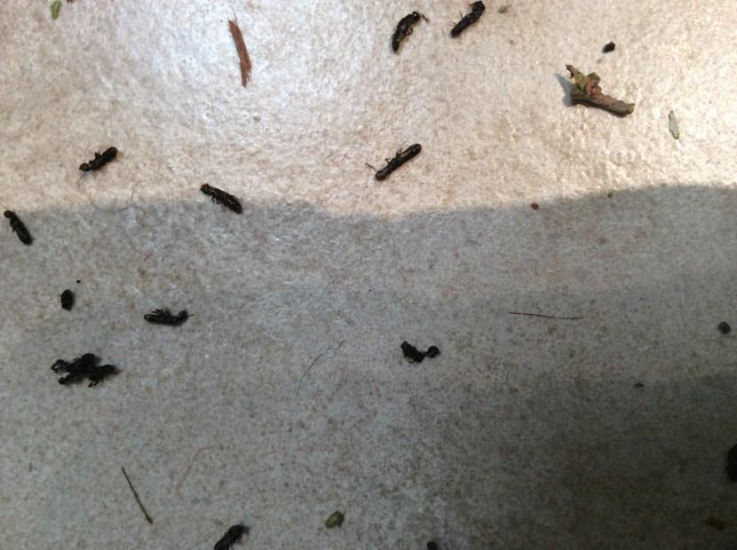 bugs-helen-wrenn