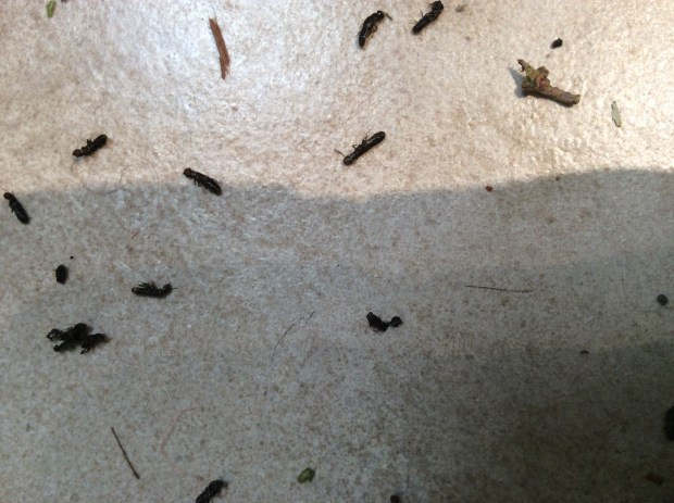 Pest Control Termite Signs After Rain May Spell Trouble