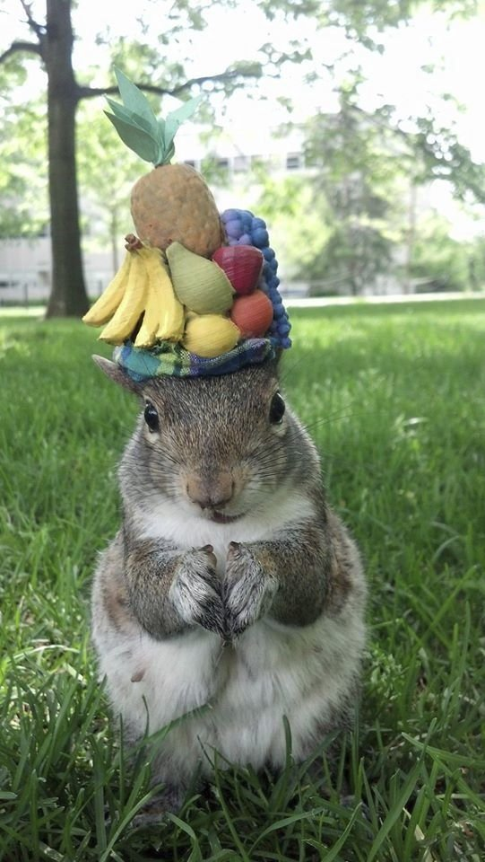 Sneezy in the Carmen Miranda hat. (Mary Krupa via AP)