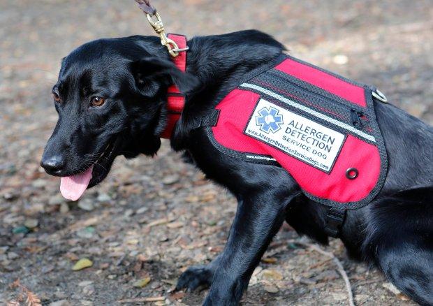Asthma Service Dog Training