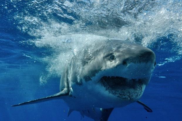 Image result for ocean reach sharks