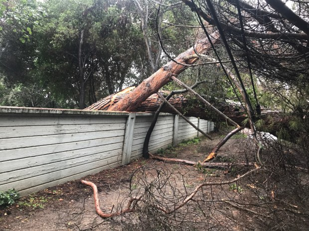Fallen trees pull down utility cables on Camino de Las Robles in Atherton, at 10:20 a.m. on Tuesday. There were two trees that went down on public rights of way in the latest storm, according to Atherton City Manager George Rodericks. (George Rodericks / Town of Atherton)