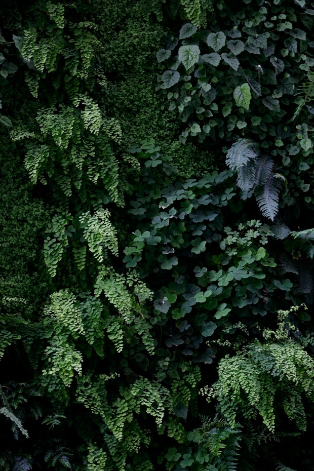 """Detail of native California plants on the """"living wall"""", a plant installation on the third-floor terrace at SFMOMA in San Francisco, Calif., on Thursday, April 27, 2017. (Josie Lepe/Bay Area News Group)"""