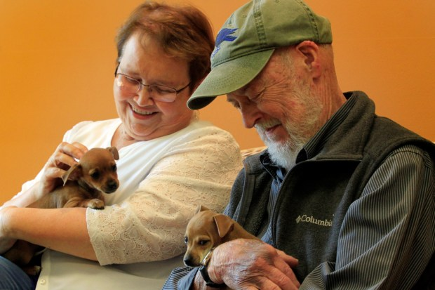 Joan Morris, wildlife and pet columnist for the East Bay Times, and Gary Bogue, retired wildlife columnist, hold a couple of puppies as they tell animal stories at Tony La Russa's Animal Rescue Foundation in Walnut Creek, Calif. on Thursday, April 20, 2017. (Laura A. Oda/Bay Area News Group)