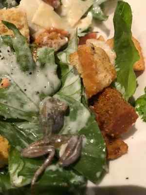 Woman finds frog in salad at Southern California BJ's restaurant