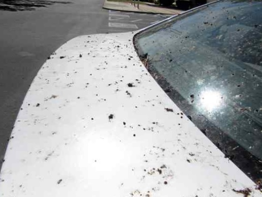 No, it's not pretty and its a pretty darn tough job to remove all this tree gunk from the exterior of a car. (Heather Hacking — Enterprise-Record)