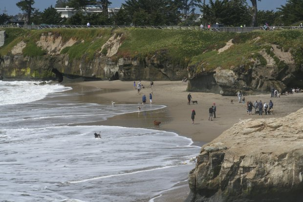 Canines and humans frolic on Dog Beach on Santa Cruz's west side. (Photocourtesy Alice Bourget)