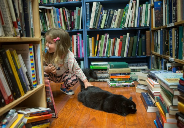 Matilda Nichol, 3, of San Jose, pets Emma, one of the store's cats, at Recycle Bookstore in San Jose, CA, on Wednesday, July 5, 2017. (LiPo Ching/Bay Area News Group)