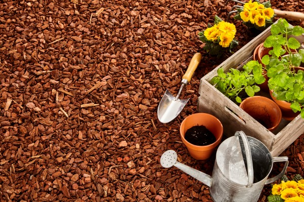 Autumn and winter are the right time for planting native annual species and to enhance the soil for springtime planting.