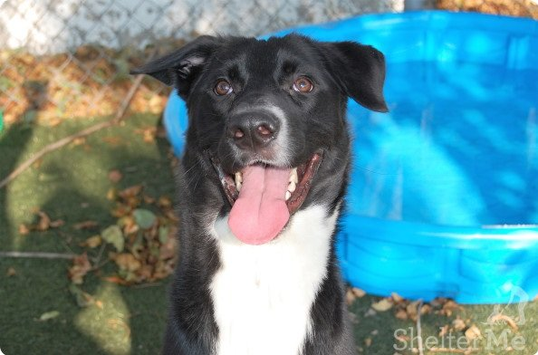 Jimmy Neutron is a super friendly, fun, loving and bouncy boy who enjoyshis walks, loves treats and enjoys playing with other dogs. He is a big goof who is smart and easily trainable. His adoption number is A126442. The shelter's featured pets, and many other animals, are available from Antioch Animal Services, 300 L St. The center is open from 10 a.m. to 5 p.m. Tuesday, Wednesday, Thursday; 10 a.m. to 2 p.m. Friday; and 10 a.m. to 5 p.m. Saturday. All of the pets from the center can be viewed at www.shelterme.com. Call 925-779-6989. COURTESY CAT COTTLE