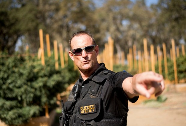 In this Sept. 29, 2017 photo, Calaveras County Sheriff Rick DiBasilio gestures while raiding a marijuana growing operation in unincorporated Calaveras County, Calif. DiBasilio says he has his hands full cracking down on thousands of illegal farms in a county that has legalized cultivation for medicinal use. Growers illegal and legal have are increasingly open about their operations and starting to encroach on neighborhoods. (AP Photo/Noah Berger)