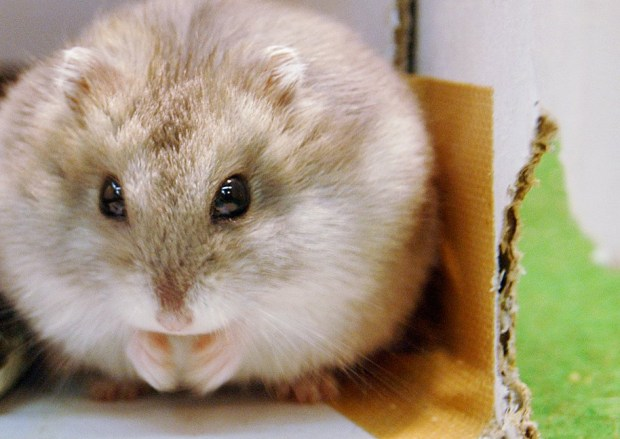 Airline told me to flush my hamster, passenger says