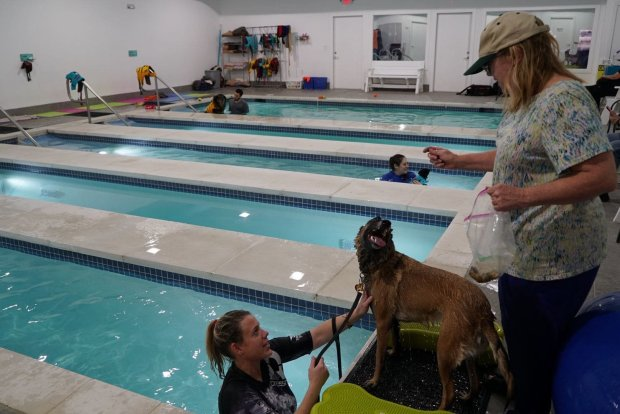 Mary Jo Seeman, right, offers a treat to Daphne during a break in the dog'sswim session with coach Kelly Coupe. Daphne, 2, is blind. MUST CREDIT: Washington Post photo by Patrick Martin